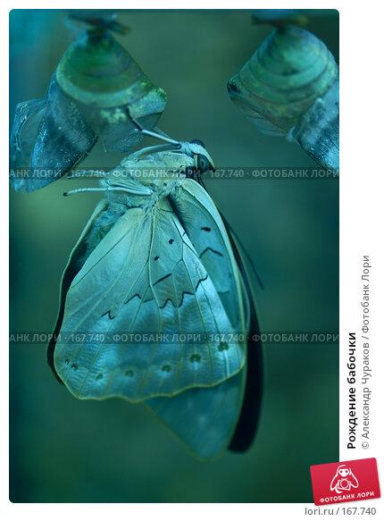 Рождение бабочки, фото № 167740, снято 3 января 2008 г. (c) Александр Чураков / Фотобанк Лори