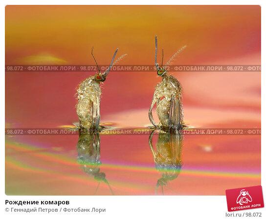 Рождение комаров, фото № 98072, снято 25 июля 2017 г. (c) Геннадий Петров / Фотобанк Лори
