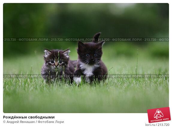 Рождённые свободными, фото № 213720, снято 26 июня 2007 г. (c) Андрей Явнашан / Фотобанк Лори