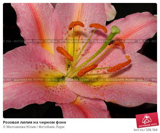 Розовая лилия на черном фоне, фото № 338164, снято 15 апреля 2008 г. (c) Молчанова Юлия / Фотобанк Лори