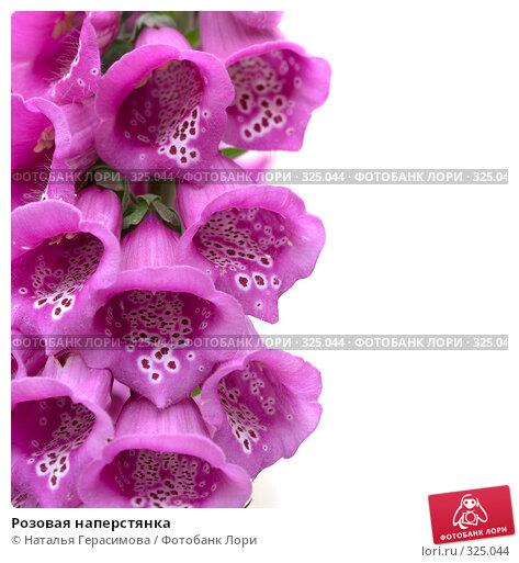 Купить «Розовая наперстянка», фото № 325044, снято 16 июня 2008 г. (c) Наталья Герасимова / Фотобанк Лори