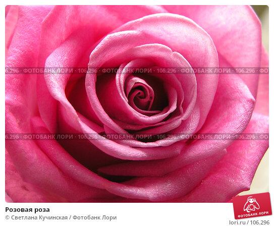 Розовая роза, фото № 106296, снято 19 января 2017 г. (c) Светлана Кучинская / Фотобанк Лори