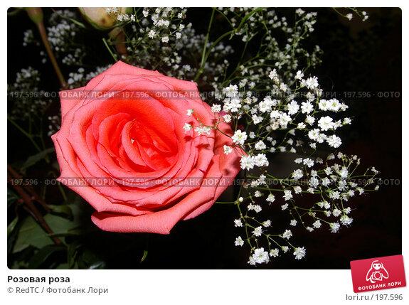 Розовая роза, фото № 197596, снято 28 декабря 2007 г. (c) RedTC / Фотобанк Лори