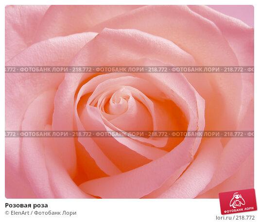 Розовая роза, фото № 218772, снято 22 октября 2016 г. (c) ElenArt / Фотобанк Лори