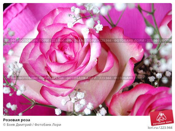 Розовая роза, фото № 223944, снято 15 марта 2008 г. (c) Боев Дмитрий / Фотобанк Лори