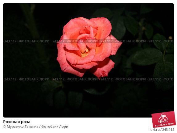 Розовая роза, фото № 243112, снято 23 июня 2007 г. (c) Мурзенко Татьяна / Фотобанк Лори