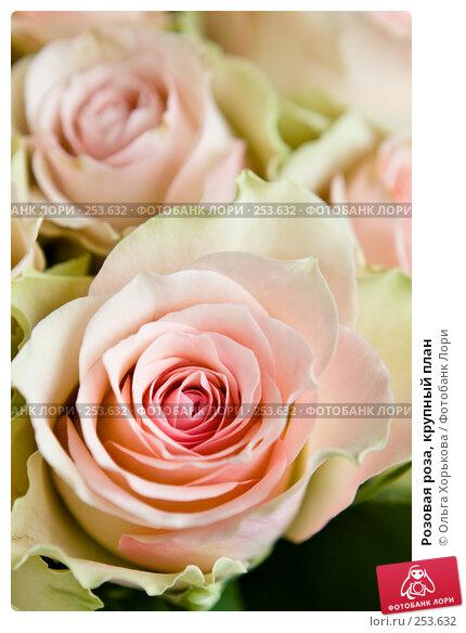 Розовая роза, крупный план, фото № 253632, снято 8 марта 2008 г. (c) Ольга Хорькова / Фотобанк Лори
