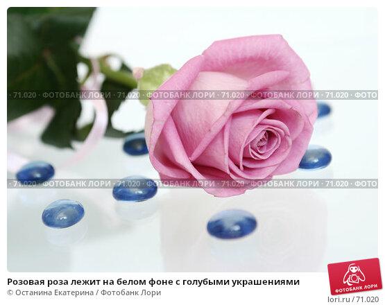 Розовая роза лежит на белом фоне с голубыми украшениями, фото № 71020, снято 29 марта 2007 г. (c) Останина Екатерина / Фотобанк Лори