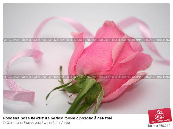Розовая роза лежит на белом фоне с розовой лентой, фото № 60212, снято 19 февраля 2007 г. (c) Останина Екатерина / Фотобанк Лори
