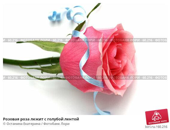 Розовая роза лежит с голубой лентой, фото № 60216, снято 22 февраля 2007 г. (c) Останина Екатерина / Фотобанк Лори