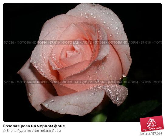 Розовая роза на черном фоне, фото № 57016, снято 22 октября 2005 г. (c) Елена Руденко / Фотобанк Лори