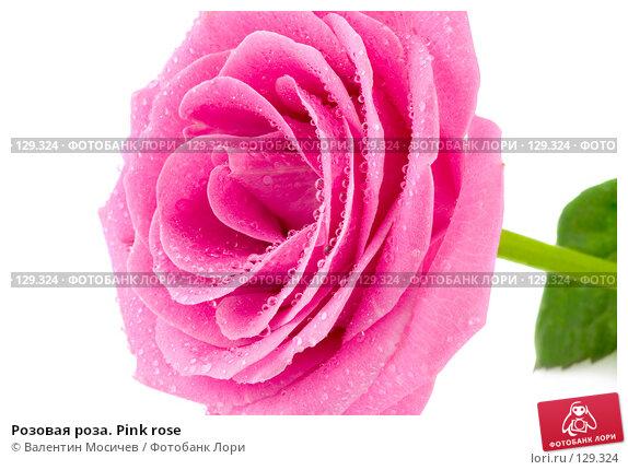 Розовая роза. Pink rose, фото № 129324, снято 3 марта 2007 г. (c) Валентин Мосичев / Фотобанк Лори