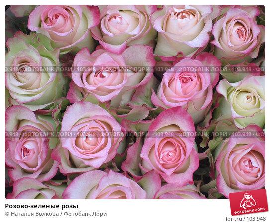 Розово-зеленые розы, фото № 103948, снято 8 марта 2017 г. (c) Наталья Волкова / Фотобанк Лори