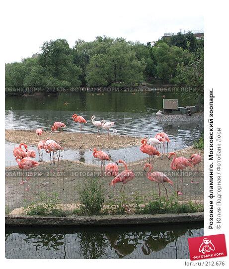 Розовые фламинго. Московский зоопарк., фото № 212676, снято 29 июля 2006 г. (c) Юлия Селезнева / Фотобанк Лори