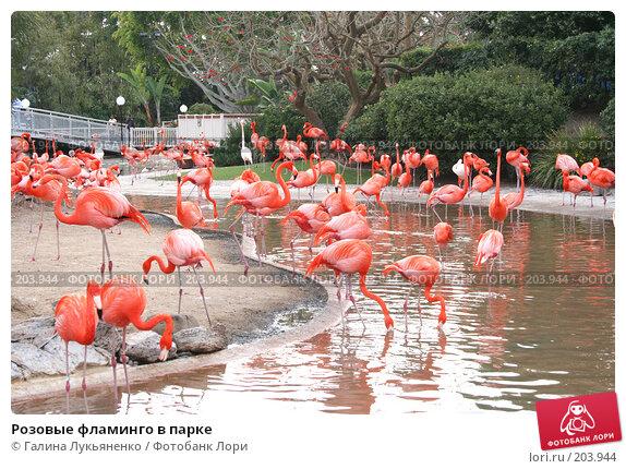 Розовые фламинго в парке, фото № 203944, снято 26 марта 2007 г. (c) Галина Лукьяненко / Фотобанк Лори