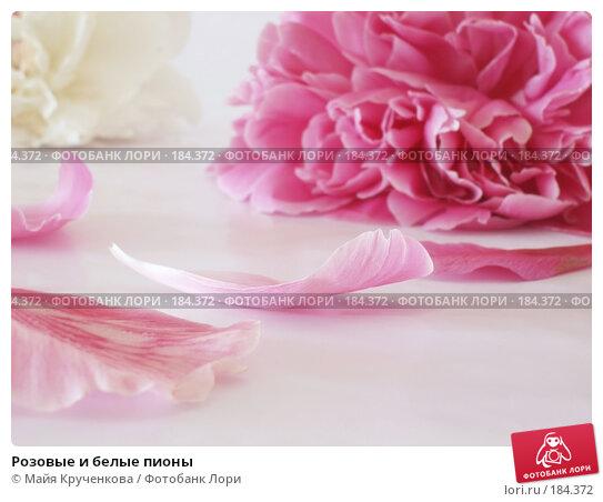 Купить «Розовые и белые пионы», фото № 184372, снято 31 мая 2007 г. (c) Майя Крученкова / Фотобанк Лори