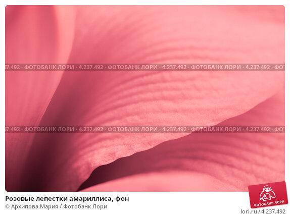 Купить «Розовые лепестки амариллиса, фон», фото № 4237492, снято 27 января 2013 г. (c) Архипова Мария / Фотобанк Лори