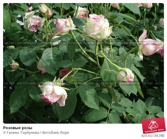 Розовые розы, фото № 34740, снято 22 июня 2005 г. (c) Галина  Горбунова / Фотобанк Лори