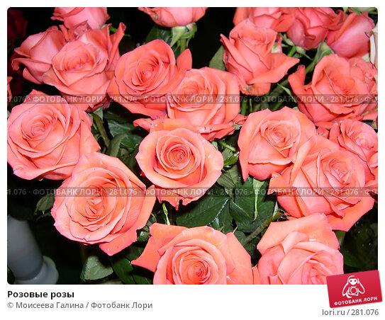 Розовые розы, фото № 281076, снято 27 апреля 2006 г. (c) Моисеева Галина / Фотобанк Лори