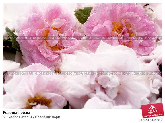 Розовые розы, фото № 334016, снято 29 июня 2007 г. (c) Литова Наталья / Фотобанк Лори