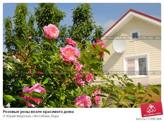 Купить «Розовые розы возле красивого дома», эксклюзивное фото № 7595568, снято 20 июня 2015 г. (c) Юрий Морозов / Фотобанк Лори