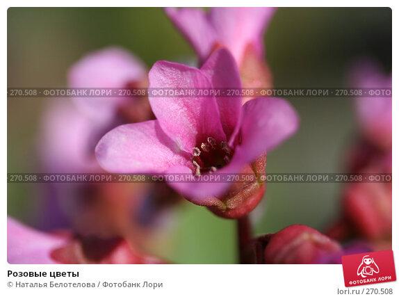Розовые цветы, фото № 270508, снято 3 мая 2008 г. (c) Наталья Белотелова / Фотобанк Лори