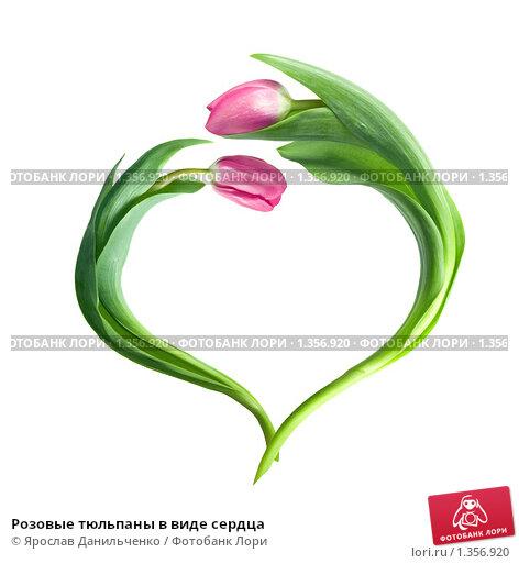 Купить «Розовые тюльпаны в виде сердца», фото № 1356920, снято 9 марта 2009 г. (c) Ярослав Данильченко / Фотобанк Лори