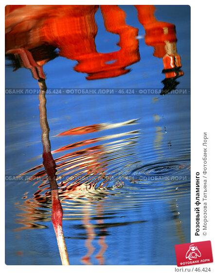 Розовый фламинго, фото № 46424, снято 9 июля 2005 г. (c) Морозова Татьяна / Фотобанк Лори