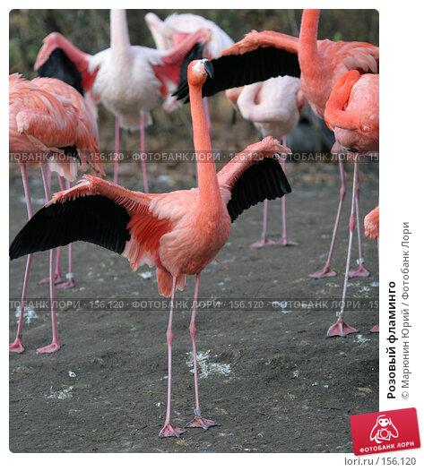 Розовый фламинго, фото № 156120, снято 10 декабря 2007 г. (c) Марюнин Юрий / Фотобанк Лори
