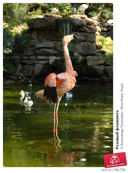 Розовый фламинго, фото № 166776, снято 22 сентября 2007 г. (c) Александр Телеснюк / Фотобанк Лори