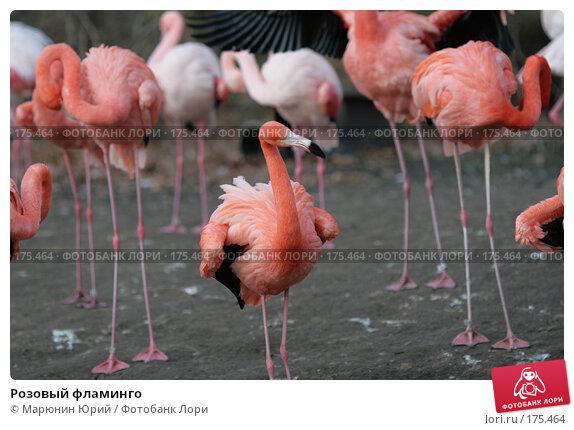Розовый фламинго, фото № 175464, снято 10 декабря 2007 г. (c) Марюнин Юрий / Фотобанк Лори