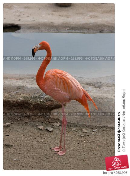 Розовый фламинго, фото № 268996, снято 12 апреля 2008 г. (c) Тимофей Косачев / Фотобанк Лори