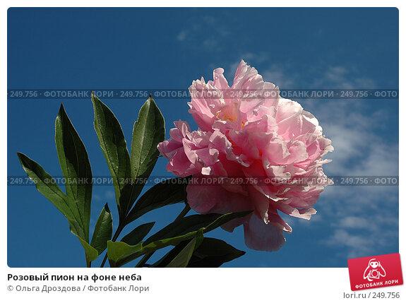 Розовый пион на фоне неба, фото № 249756, снято 22 июня 2005 г. (c) Ольга Дроздова / Фотобанк Лори