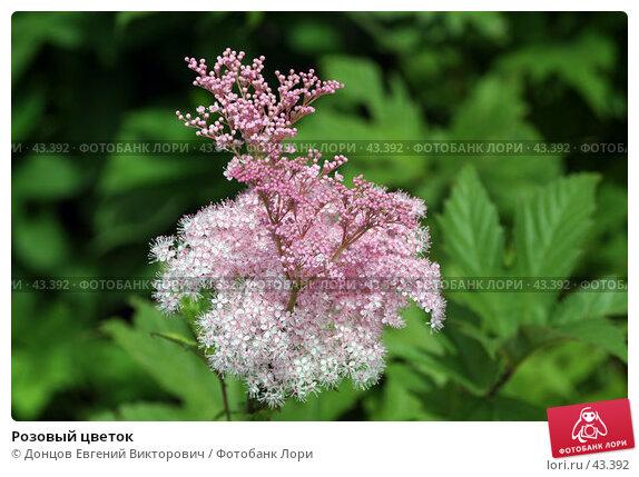 Розовый цветок, фото № 43392, снято 23 июля 2006 г. (c) Донцов Евгений Викторович / Фотобанк Лори