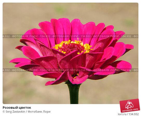 Розовый цветок, фото № 134932, снято 14 июля 2005 г. (c) Serg Zastavkin / Фотобанк Лори