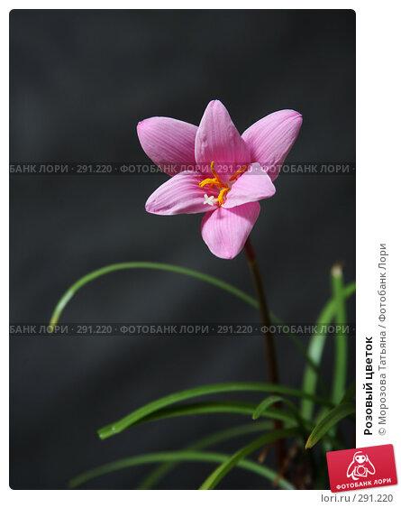 Купить «Розовый цветок», фото № 291220, снято 15 июня 2007 г. (c) Морозова Татьяна / Фотобанк Лори