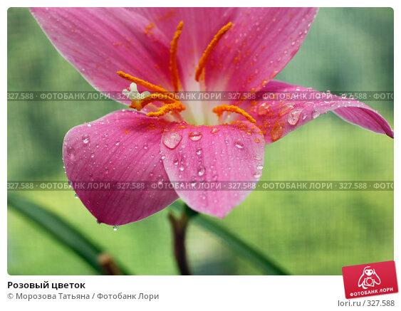 Розовый цветок, фото № 327588, снято 17 июня 2008 г. (c) Морозова Татьяна / Фотобанк Лори