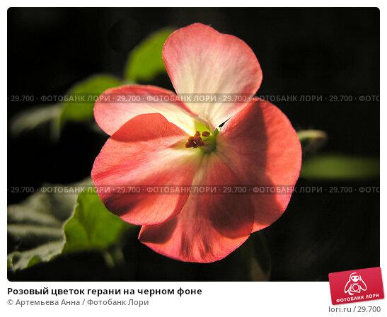 Купить «Розовый цветок герани на черном фоне», фото № 29700, снято 25 апреля 2018 г. (c) Артемьева Анна / Фотобанк Лори