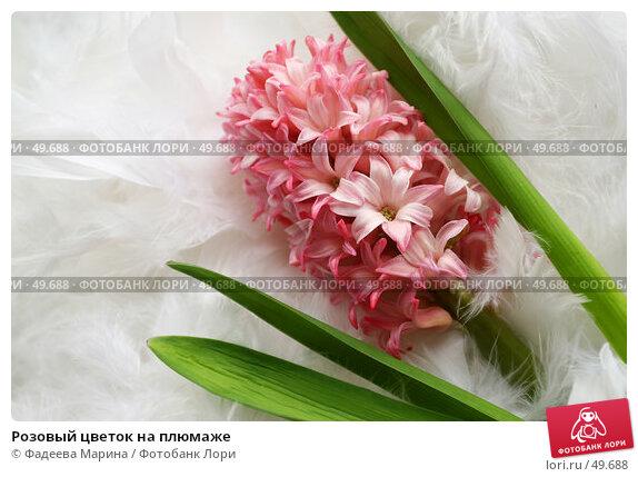 Розовый цветок на плюмаже, фото № 49688, снято 10 февраля 2007 г. (c) Фадеева Марина / Фотобанк Лори