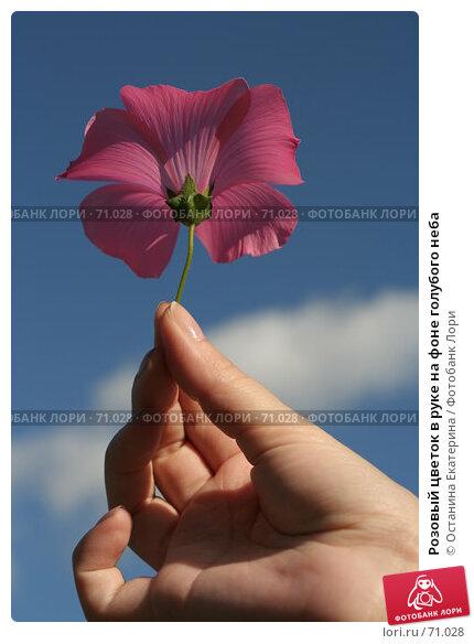 Розовый цветок в руке на фоне голубого неба, фото № 71028, снято 10 августа 2007 г. (c) Останина Екатерина / Фотобанк Лори