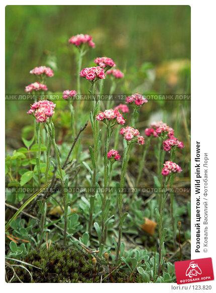 Купить «Розовый цветок. Wild pink flower», фото № 123820, снято 25 мая 2007 г. (c) Коваль Василий / Фотобанк Лори