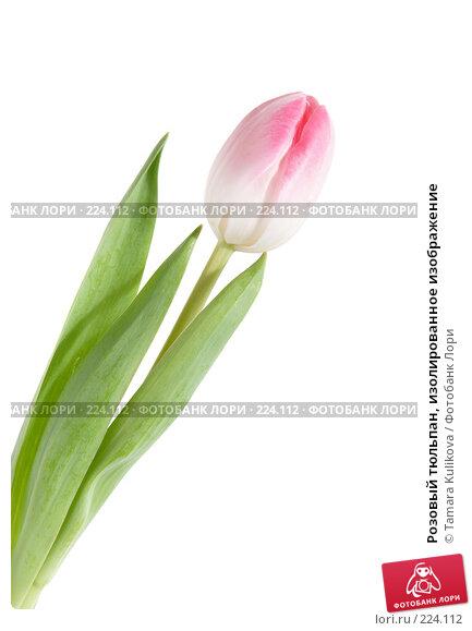 Розовый тюльпан, изолированное изображение, фото № 224112, снято 15 марта 2008 г. (c) Tamara Kulikova / Фотобанк Лори