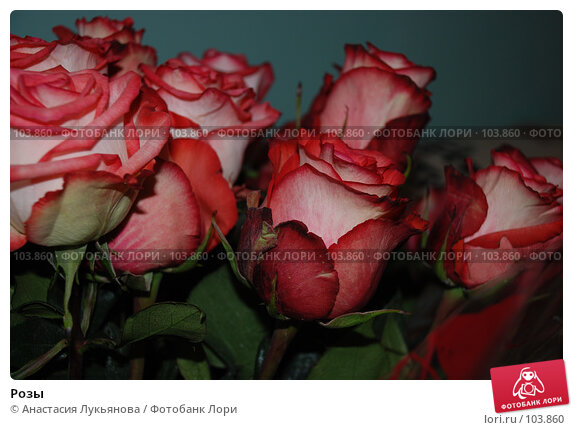Розы, фото № 103860, снято 9 декабря 2016 г. (c) Анастасия Лукьянова / Фотобанк Лори