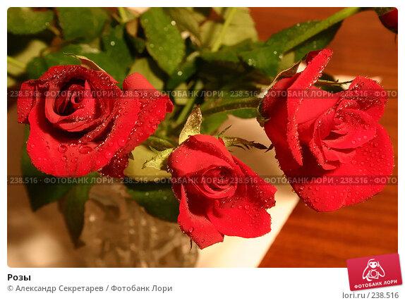 Розы, фото № 238516, снято 27 марта 2017 г. (c) Александр Секретарев / Фотобанк Лори