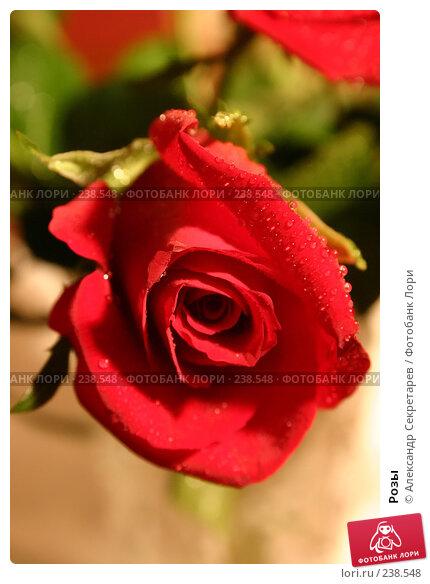 Розы, фото № 238548, снято 29 мая 2017 г. (c) Александр Секретарев / Фотобанк Лори