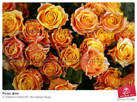 Розы, фон, фото № 37488, снято 26 апреля 2007 г. (c) Vladimir Fedoroff / Фотобанк Лори