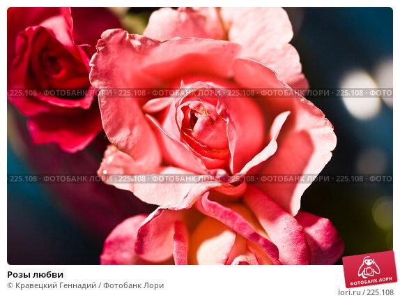 Розы любви, фото № 225108, снято 3 августа 2005 г. (c) Кравецкий Геннадий / Фотобанк Лори
