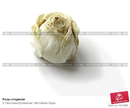 Розы отцвели, фото № 121056, снято 29 июня 2017 г. (c) Светлана Кучинская / Фотобанк Лори