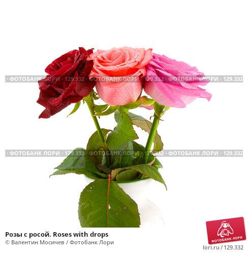Розы с росой. Roses with drops, фото № 129332, снято 3 марта 2007 г. (c) Валентин Мосичев / Фотобанк Лори