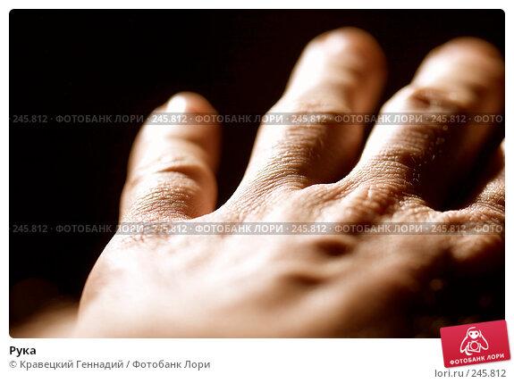 Рука, фото № 245812, снято 26 февраля 2005 г. (c) Кравецкий Геннадий / Фотобанк Лори